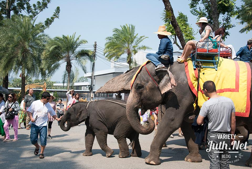 ลูกช้างตามแม่ไปทำงาน