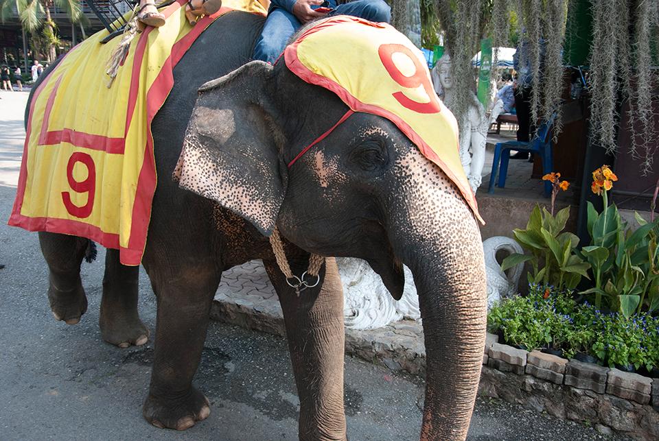 ช้างเด็ก