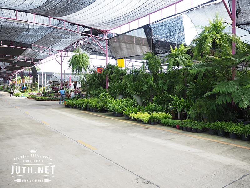 ตลาดขายส่งต้นไม้พระเงิน