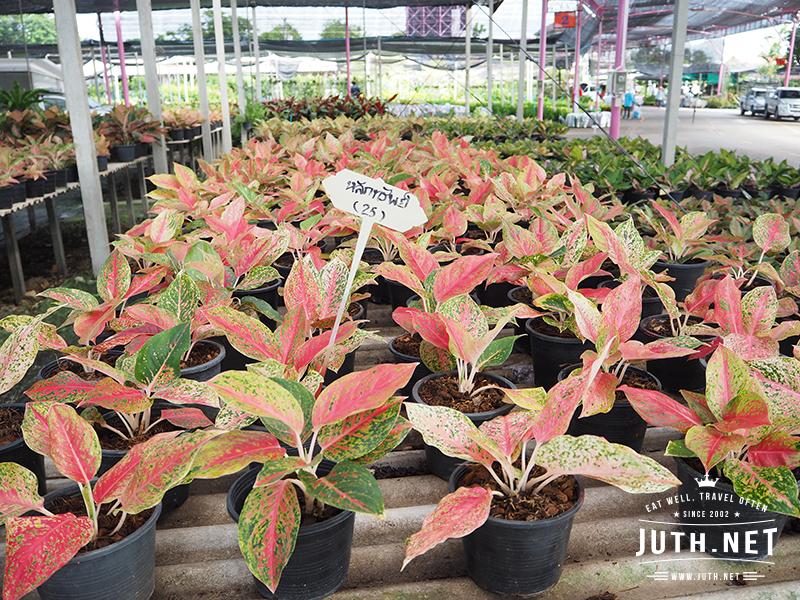 JUTHNET_PlantMarket8241219