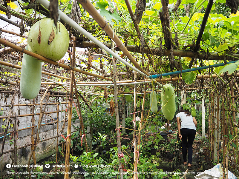 juthnet_farmchangdang011911