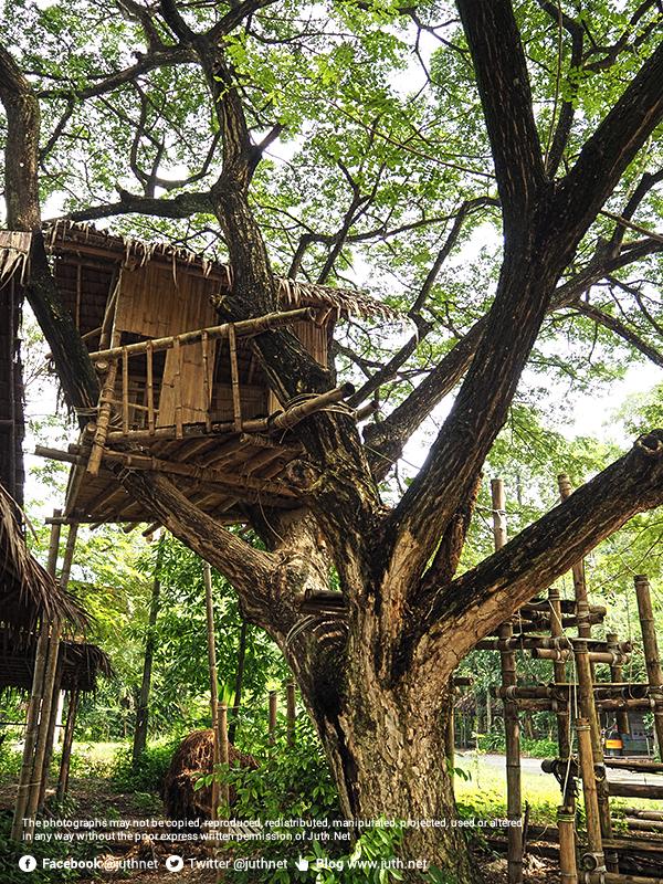 บ้านบนต้นไม้