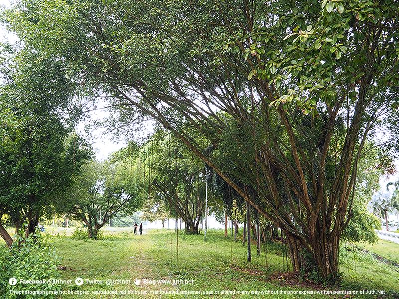 สวนหลังพระพุทธคยาเจดีย์
